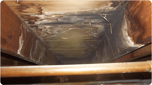 Image of Mold in a Crawl Space